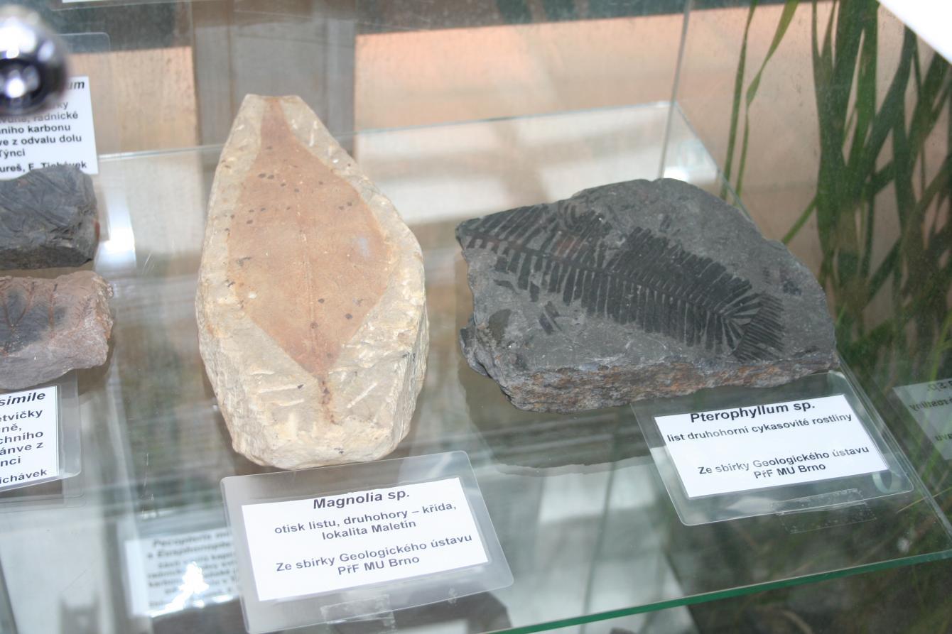 karbonová fosilie