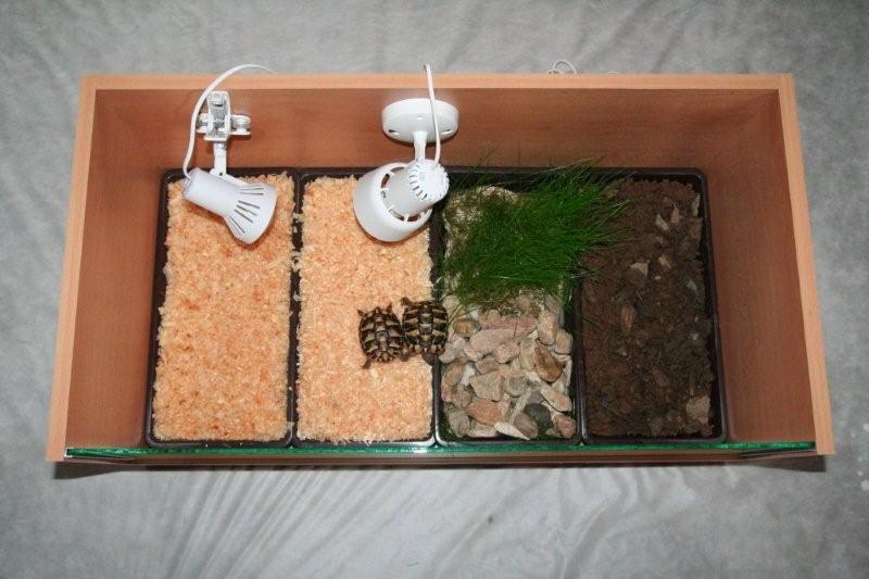 [http://www.sci.muni.cz/botany/salicornia/stul/zs07. jpg]