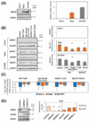 New paper in Cancers