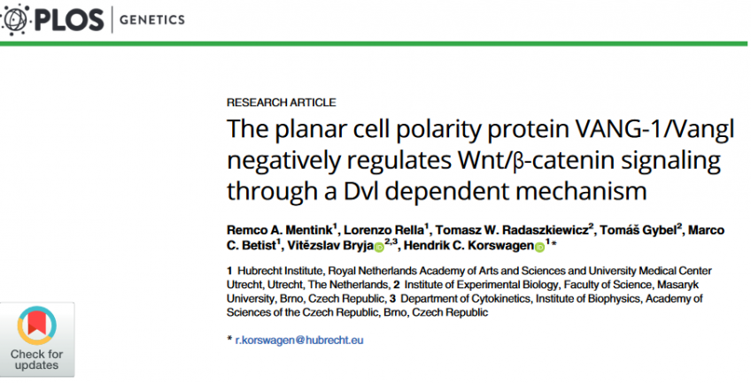 The planar cell polarity protein VANG-1/Vangl negatively regulates Wnt/β-catenin signaling through a Dvl dependent mechanism