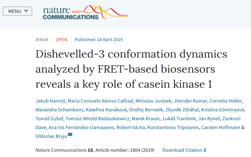 Dishevelled-3 conformation dynamics analyzed by FRET-based biosensors reveals a key role of casein kinase 1
