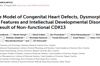 Mouse Model of Congenital Heart Defects, Dysmorphic Facial Features and Intellectual Developmental Disorders as a Result of Non-functional CDK13