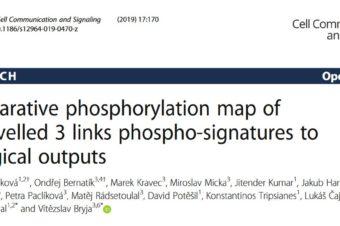 Comparative phosphorylation map of Dishevelled 3 links phospho-signatures to biological outputs.