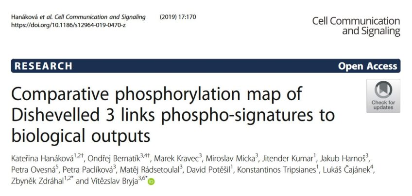 Comparative phosphorylation map of Dishevelled 3 links phospho-signatures to biological outputs.