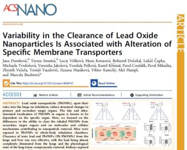 Variability in the Clearance of Lead Oxide Nanoparticles Is Associated with Alteration of Specific Membrane Transporters