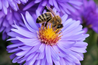 Changes in physiological and immune parameters of bees during the year – Differences between short-lived and long-lived generations of bees are not only in what activities they do