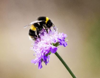 The Effect of Foraging on Bumble Bees, Bombus terrestris, Reared under Laboratory Conditions