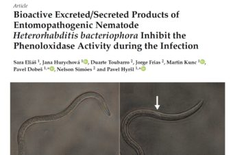 Bioactive Excreted/Secreted Products of Entomopathogenic Nematode Heterorhabditis bacteriophora Inhibit the Phenoloxidase Activity during the Infection