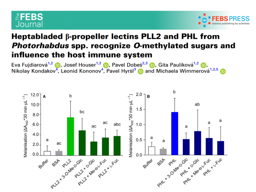 Heptabladed β‐propeller lectins PLL2 and PHL from Photorhabdus spp. recognize O‐methylated sugars and influence the host immune system