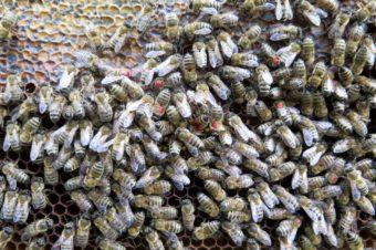Značení zimních včel
