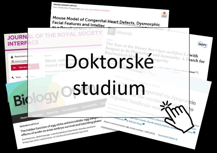 PhD Workshop 19. 2. 2021