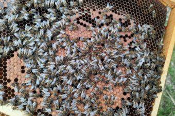 Včelí sezóna začíná