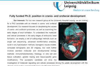 Nabídka PhD pozice v oblasti kranio- a orofaciálního vývoje