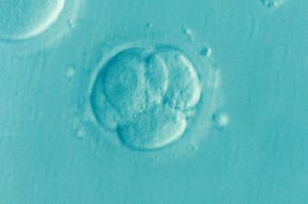 Nabídka zaměstnání – embryolog