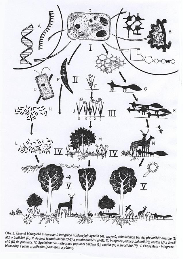 Základní charakteristiky živočicha