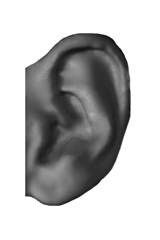 it reaches the half of an auricle width
